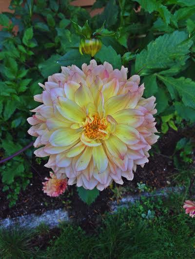 Flowerinyard